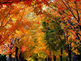 Autumn Rainbows! by marilynjane, Photography->Landscape gallery