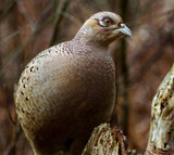 I'm so glad by biffobear, photography->birds gallery