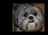 ' All I want for Xmas is my two front teeth ' by sasraku, photography->pets gallery