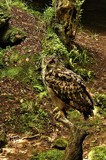 Eddie 2 by biffobear, photography->birds gallery