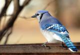 Bird Watching #4 by tigger3, photography->birds gallery