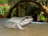 amphibious friend by postaldude66, Photography->Animals gallery
