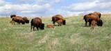 Prairie Nursery by Nikoneer, photography->animals gallery