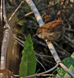 Bugwatch by biffobear, photography->birds gallery