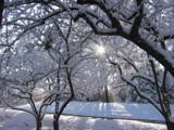sun peeking through snowy tree by gagabhh, Photography->Landscape gallery