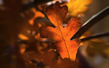 Autumn Warmth by nmsmith, Photography->Macro gallery