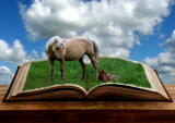 Book of Horse by 0930_23, photography->manipulation gallery