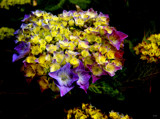 Flower Dark by rvdb, photography->flowers gallery