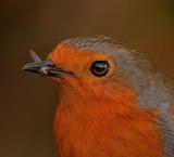 Yummy by biffobear, photography->birds gallery