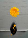 Minimalist by rvdb, photography->manipulation gallery