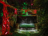 Christmas in the Greenhouse by Pistos, photography->gardens gallery