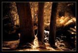 Fairhaven garden trust 2 by JQ, photography->landscape gallery