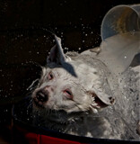 Billy by biffobear, photography->pets gallery