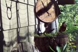New Robin by ironjoe, Photography->Birds gallery