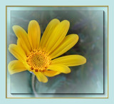 Citrus Shades 4 - Yellow Daisy by LynEve, Photography->Flowers gallery