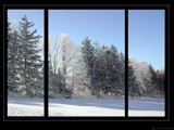 Triptic Trees by RobNevin, Photography->Landscape gallery