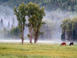 Horses in Morning fog by fotobob, Photography->Landscape gallery