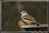 Captain Jack Sparrow by Jimbobedsel, photography->birds gallery