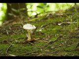 shroom by tbhockey, Photography->Mushrooms gallery