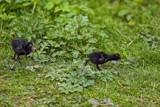 Identical by biffobear, photography->birds gallery