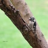 Long Beak by tigger3, photography->birds gallery