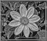 B & W Wall Plaque by tigger3, photography->manipulation gallery