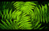 Fern by coram9, Photography->Nature gallery