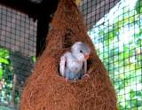 A newborn by sahadk, photography->birds gallery