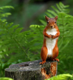 Ready for a quick flash.... by biffobear, photography->animals gallery