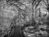 A Walk in the Black(and White),Forest by biffobear, photography->landscape gallery