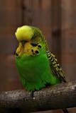 I tawt I taw by biffobear, photography->birds gallery