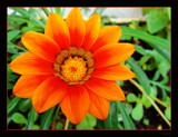 Orange by dmk, Photography->Flowers gallery