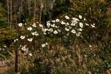 Late Season Garden Color by tigger3, photography->gardens gallery