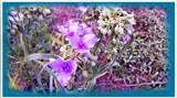 Flower Work Part 1 by galaxygirl1, photography->manipulation gallery