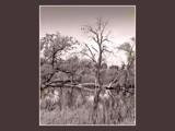 City Swampland by fotobob, Photography->Landscape gallery