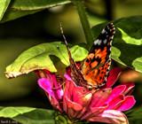 A Garden Capture by tigger3, photography->butterflies gallery