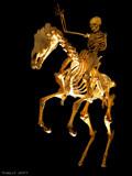 The Bone Ranger. by trisbert, photography->general gallery
