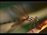 Getting a Grasp of Things by photoimagery, Photography->Insects/Spiders gallery