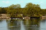 Shibdon reloaded by biffobear, Photography->Water gallery