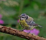 So you think by biffobear, photography->birds gallery