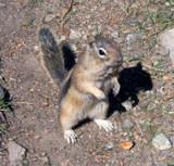 Chipmunk by Betheena, Photography->Animals gallery