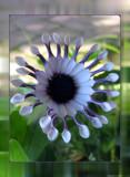 Fanfare by Hottrockin, Photography->Flowers gallery