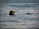 The Social Life of the Single Seal by Pjsee16, photography->animals gallery