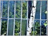 lotsa windows by Marzena, photography->architecture gallery