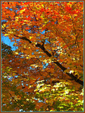 Fall's Stained Glass by ccmerino, Photography->Landscape gallery
