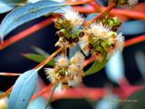 Australiana by Samatar, Photography->Flowers gallery