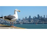 Seagul's View of SF by bunyip, Contests->Fowl Portrait gallery