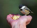 Behold by biffobear, photography->birds gallery