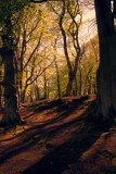 Woodland Walk by WTFlack, photography->nature gallery