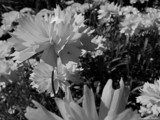 Grandma's House by cjperisho, Photography->Flowers gallery